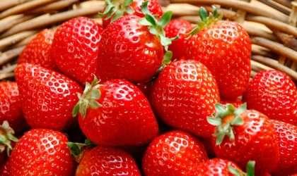 Las fresas, las reinas de los frutos rojos
